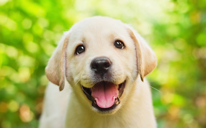 Happy Dogs – Do You Know What Makes Them Really So?