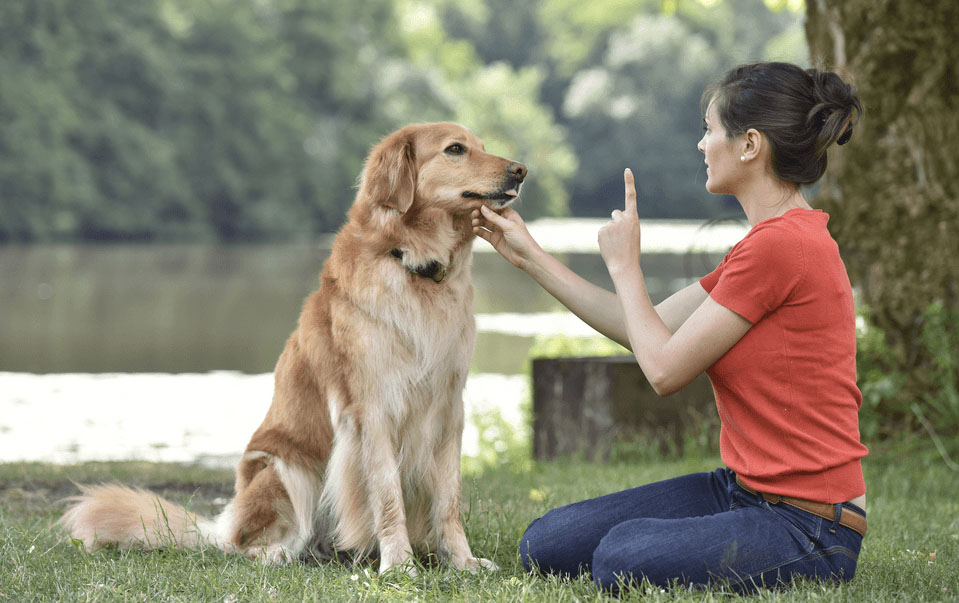 How Can You Train Your Dog? Dog Training Ways