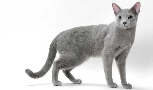 short girl cat names