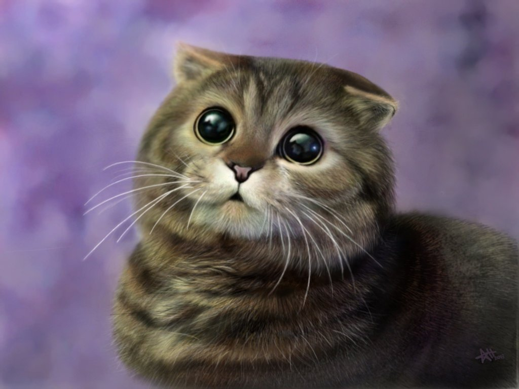 Scottish Fold kittens: description of the breed, photo 39