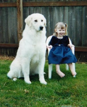 Kuvasz History, Personality, Appearance, Health and Pictures
