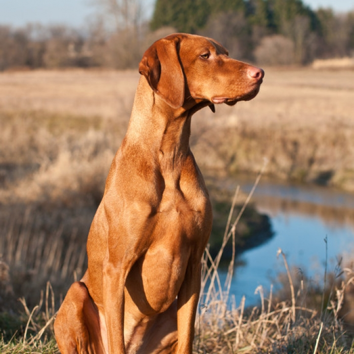 Best Training Practices For Dogs