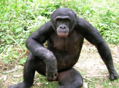 ape-08.jpg