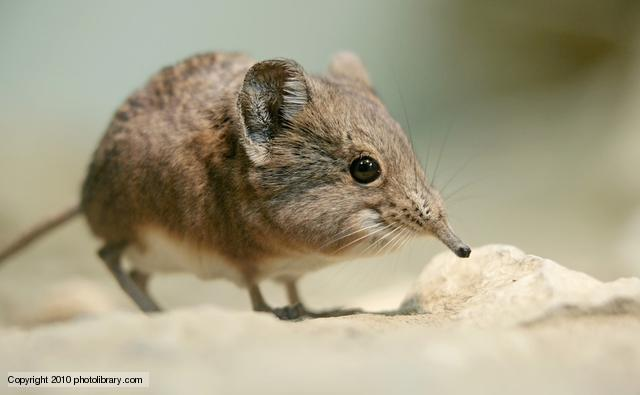 What Food Does A Shrew Eat