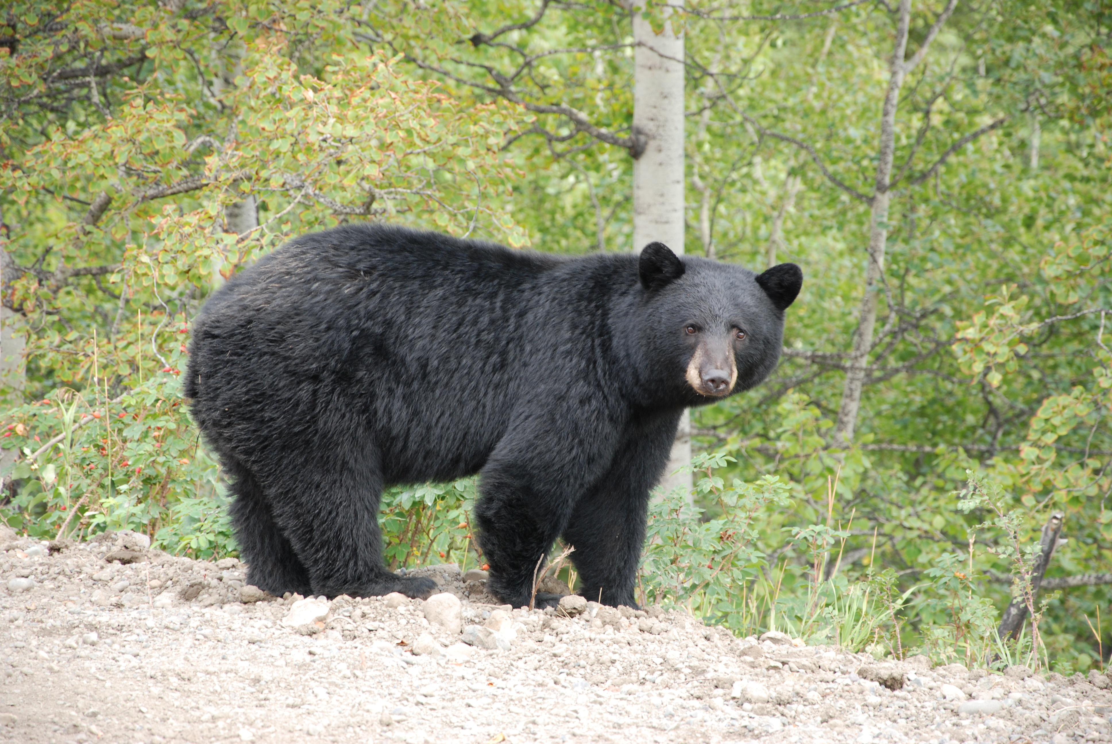 Black bear attacks hiker- '-I couldn'-t believe this was happening ...