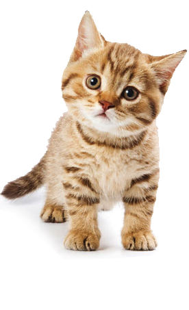 cat facts history useful information and amazing pictures