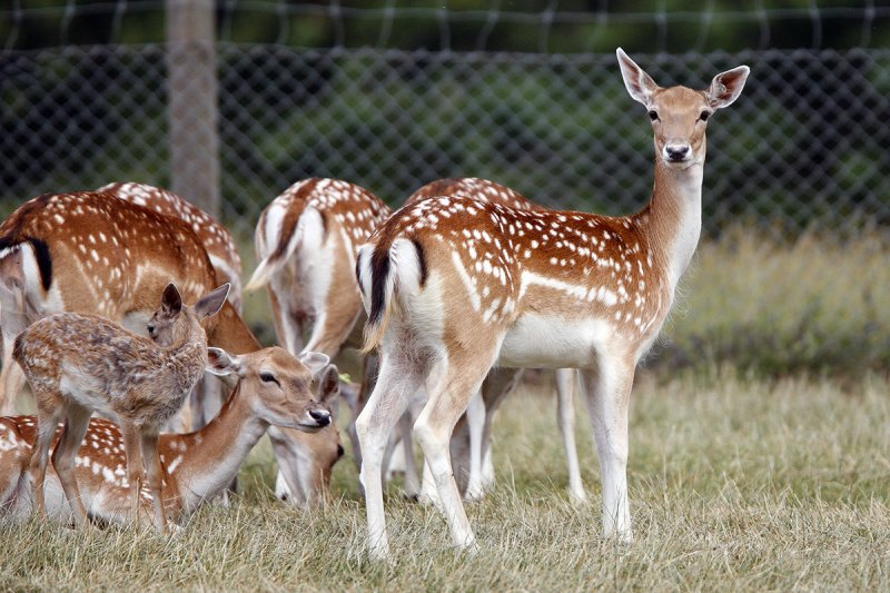 mammals of asia and fallow deer Endangered mammals of asia show mammals in asia with profiles available show all  asia: fallow deer: iran, israel: far eastern myotis: china, japan, korea, russia.