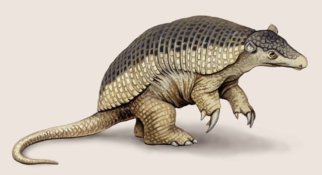 giant armadillo facts  history  useful information and amazing pictures