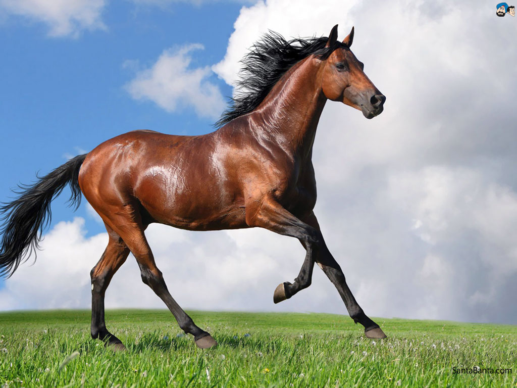 Horse Facts History Useful Information and Amazing Pictures