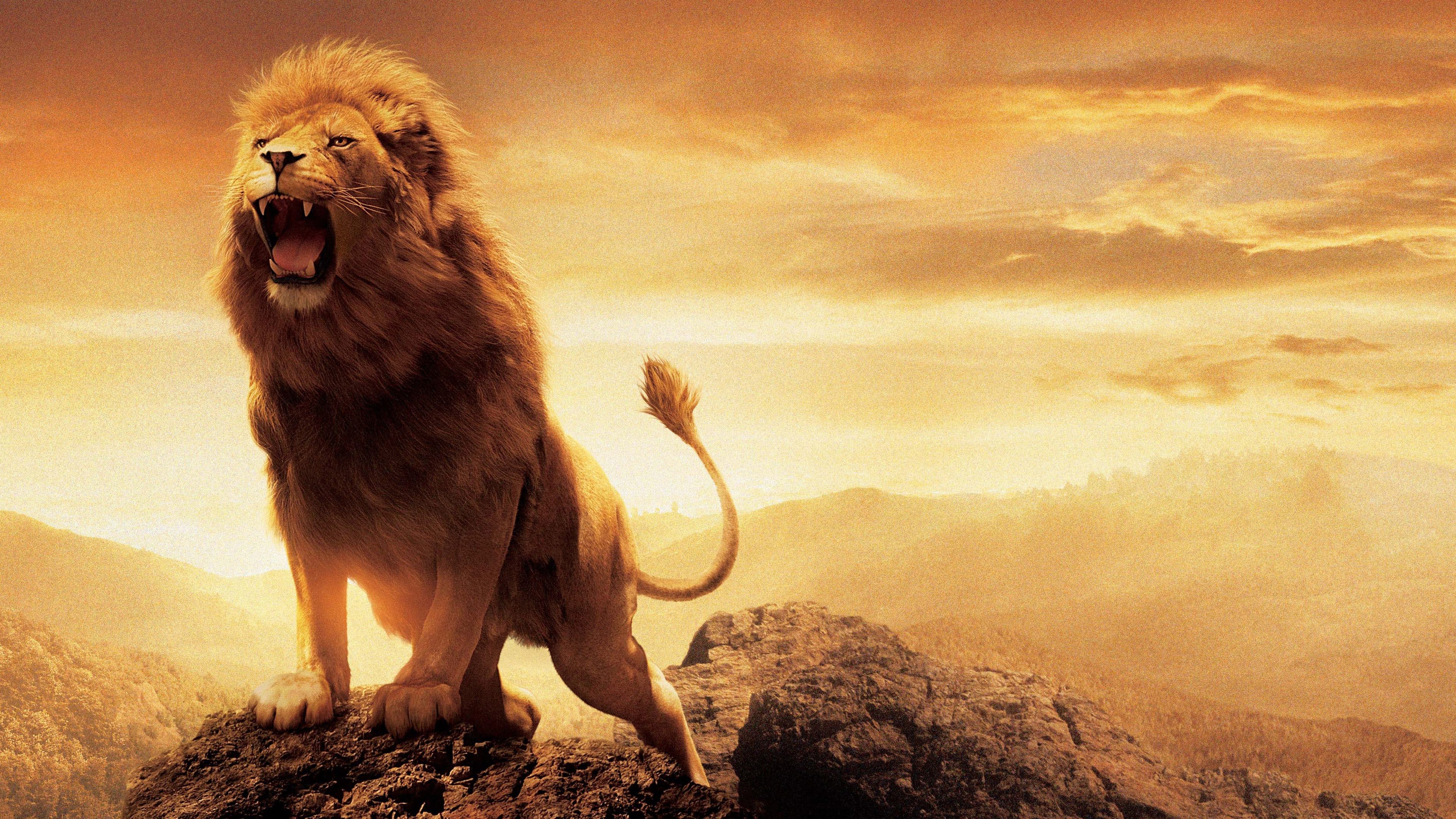 lion facts history useful information and amazing pictures