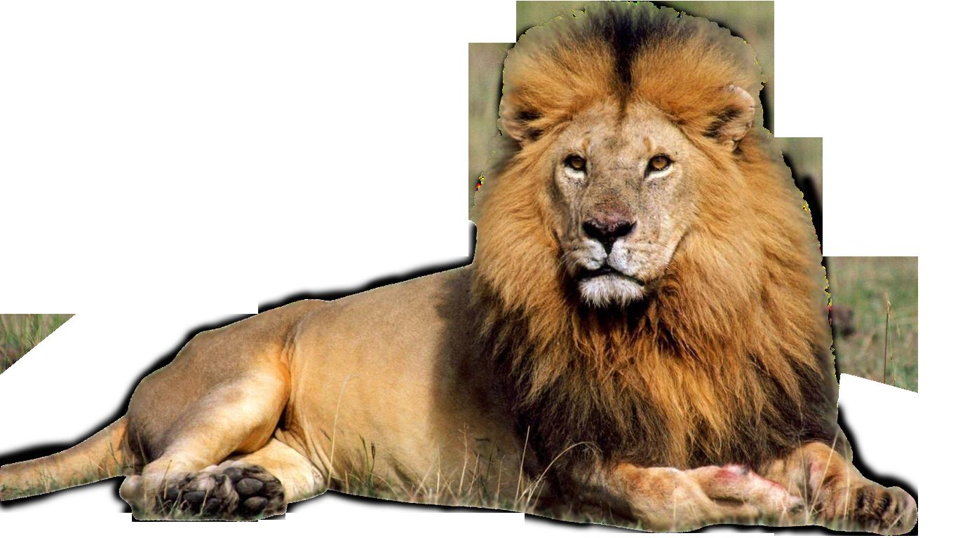 Lion Facts, History, U...