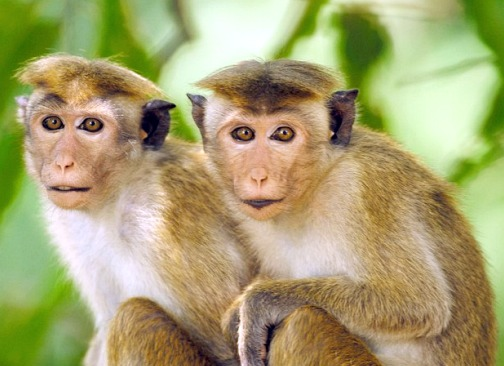monkey facts history useful information and amazing pictures