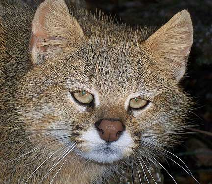 Pampas Cat Litter
