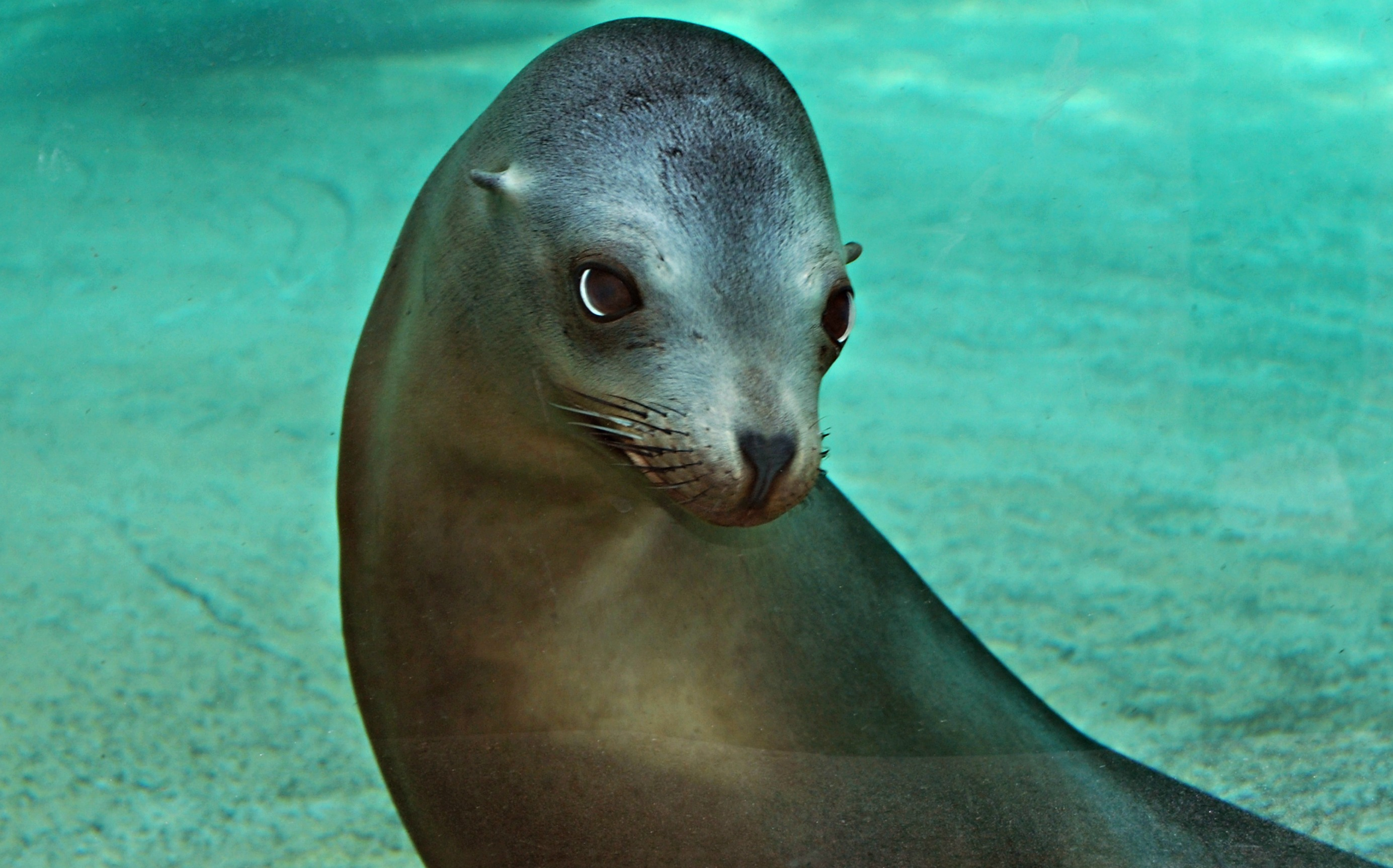 Sea Lion Facts, History, Useful Information and Amazing ...