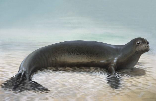 скачать торрент Seal - фото 6
