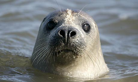 Seal Facts History Useful Information and Amazing Pictures