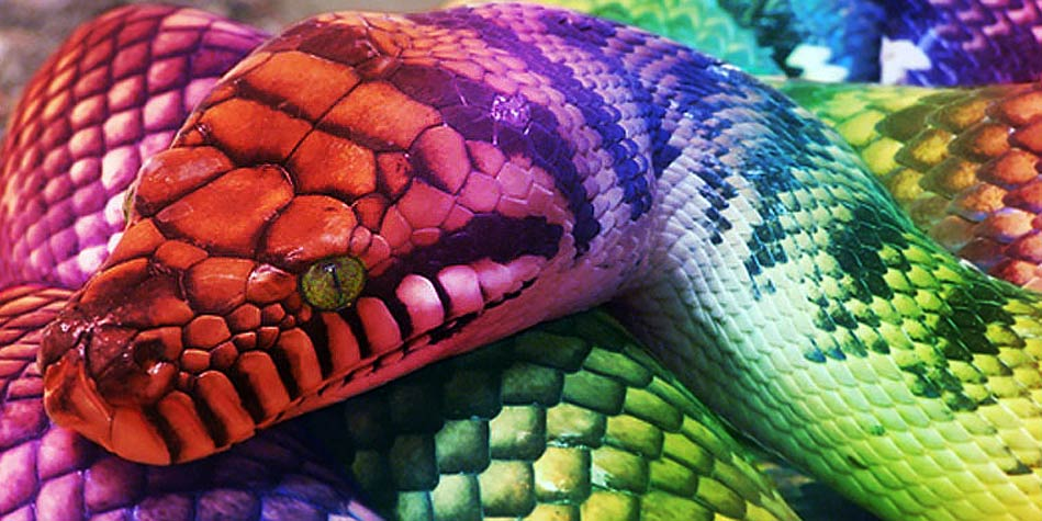 Rainbow Snake Facts, History, Useful Information and ...